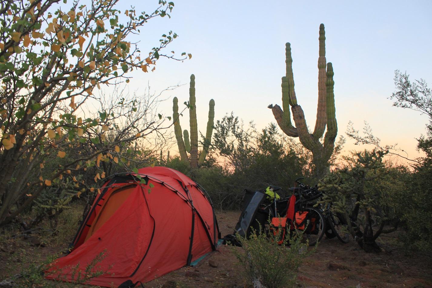 Zeltplatz in der Kaktuslandschaft