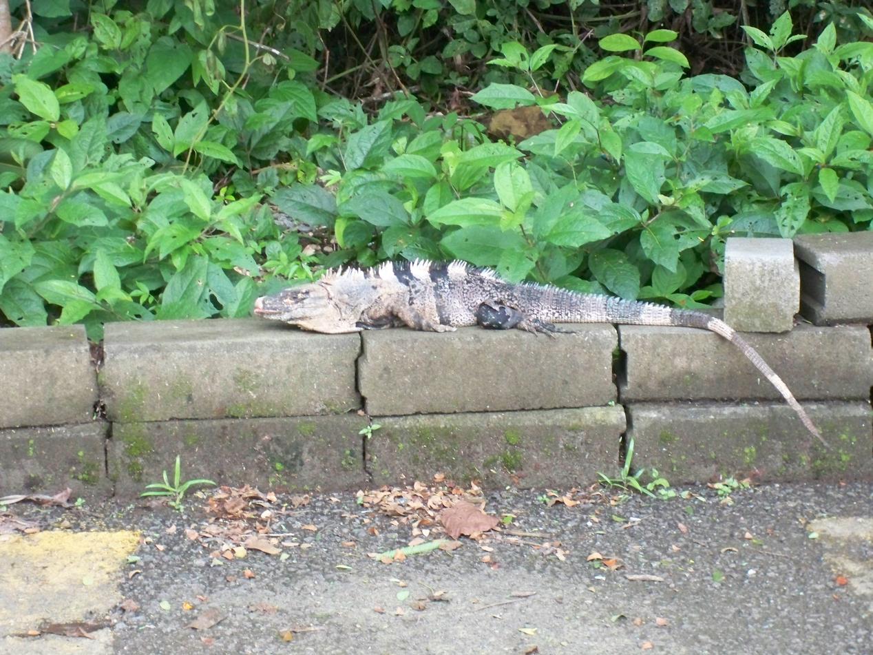 Tierwelt von Costa Rica