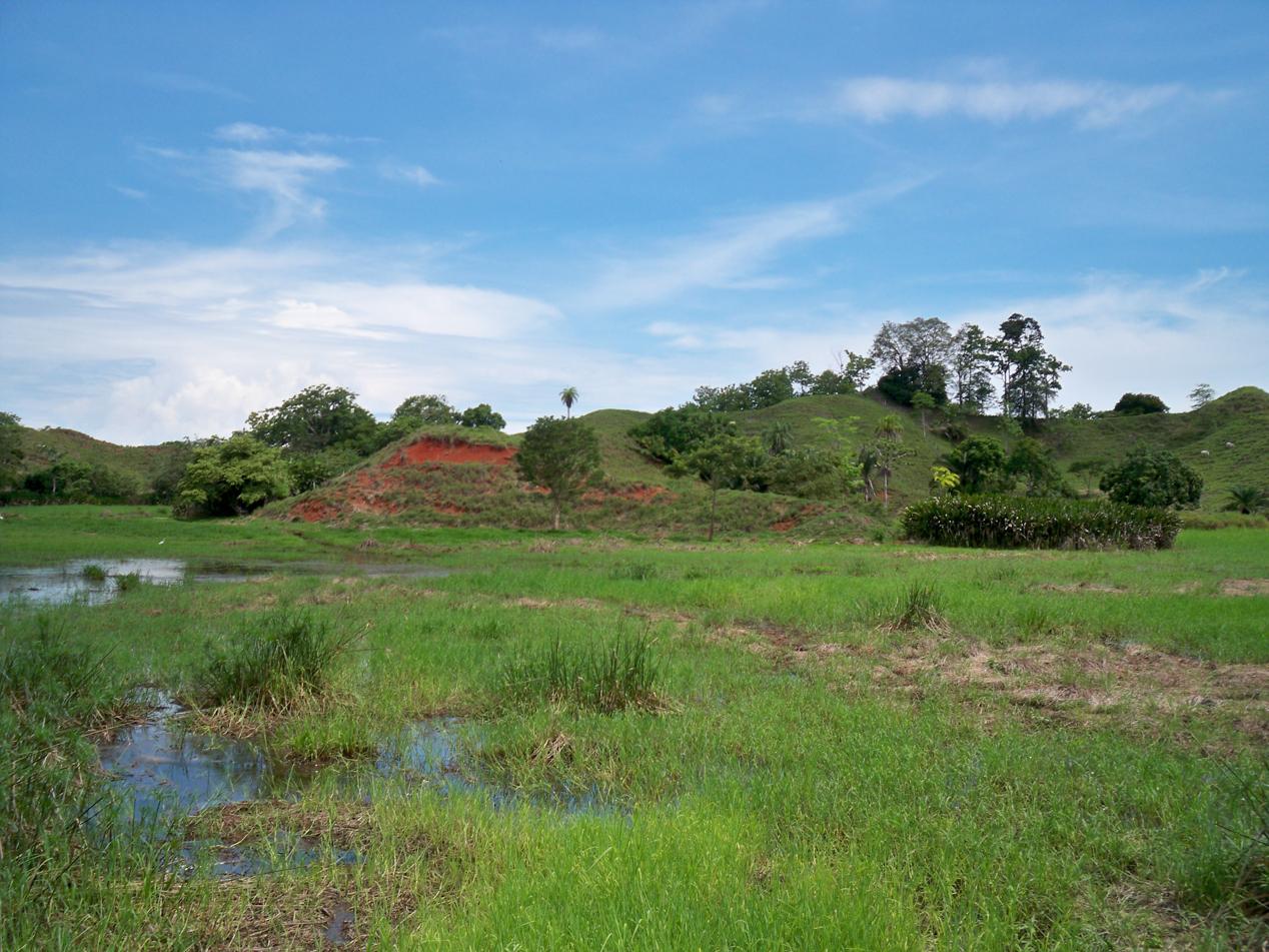 Von so einer saftigen und wasserreichen Weide können die Rinder in Nicaragua, El Salvador und Honduras nur träumen.