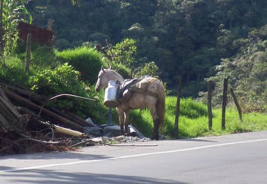 Hier wurde gerade eine Lieferung Frischmilch aus dem Tal zur Straße gebracht.