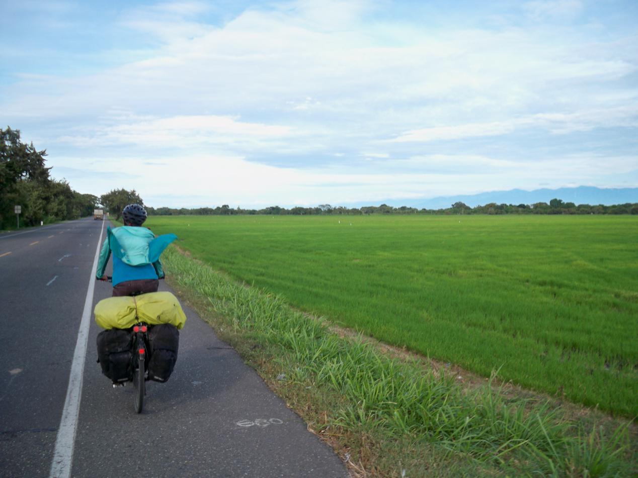Auf der anderen Seite wurde Reis angepflanzt.