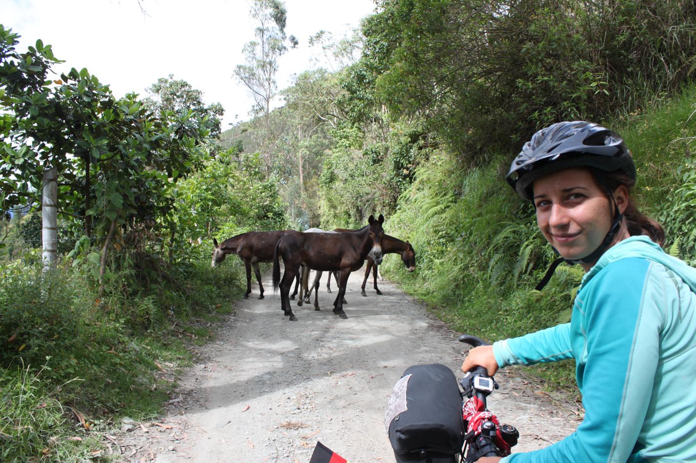 Diese Pferdebande versperrte uns den Weg.