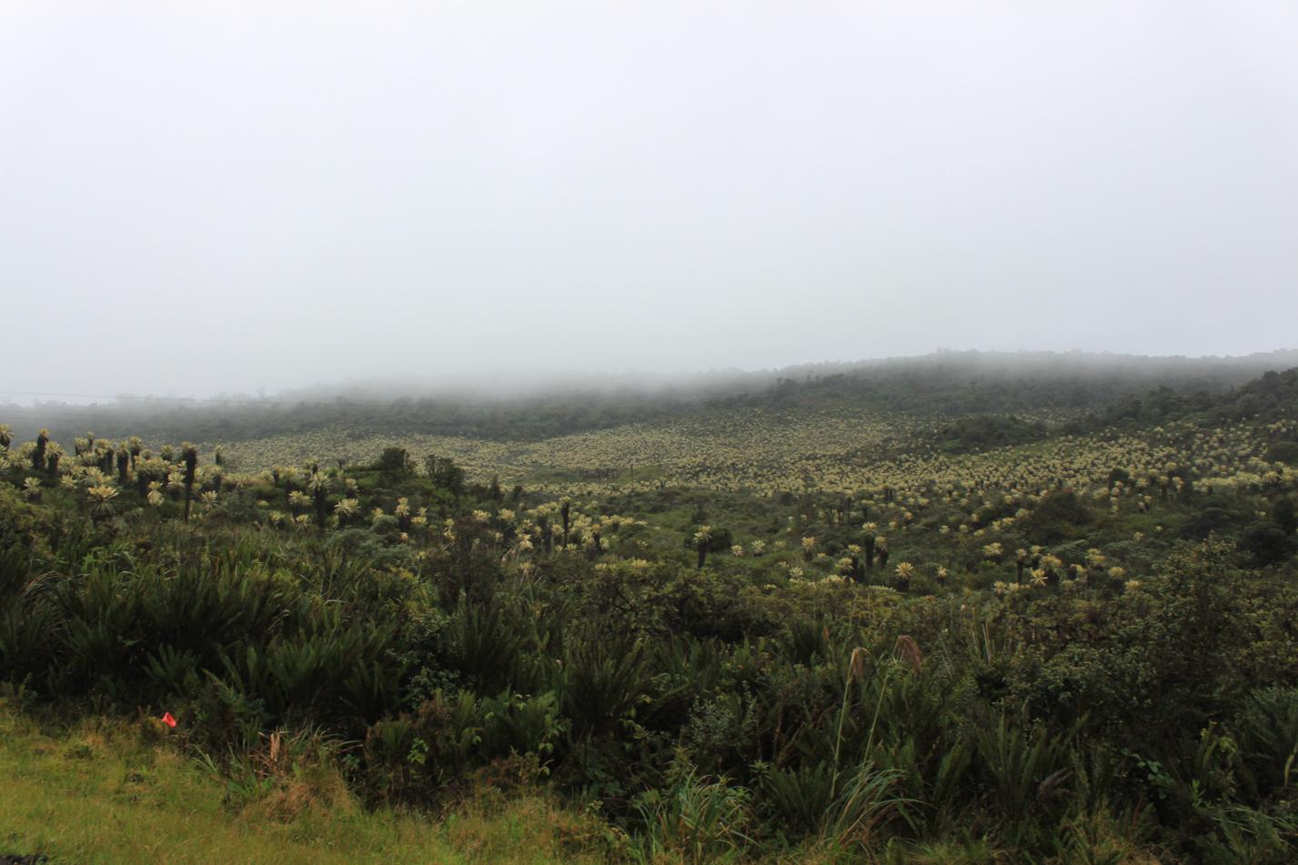 Auf dem höchstem Punkt lichtete sich der Nebel kurz und wir bekamen eine tolle Aussicht auf die Bergvegetation geboten.