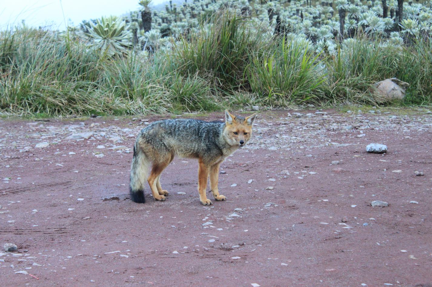Dieser Fuchs kam uns Gesellschaft leisten.