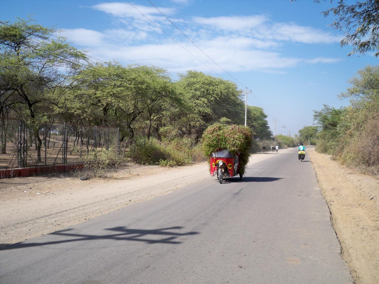 DAS Fortbewegungs- und Transportmittel im Norden von Peru.