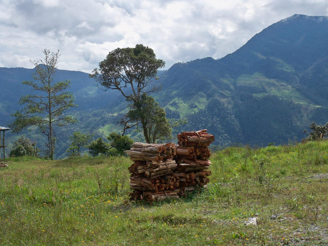 Feuerholz gibt es entlang der Strecke derzeit im Überfluss. Die Straße wird demnächst zweispurig ausgebaut und derzeit wir der Wald entlang des Hanges für die Verbreiterung kurz und klein gehauen.