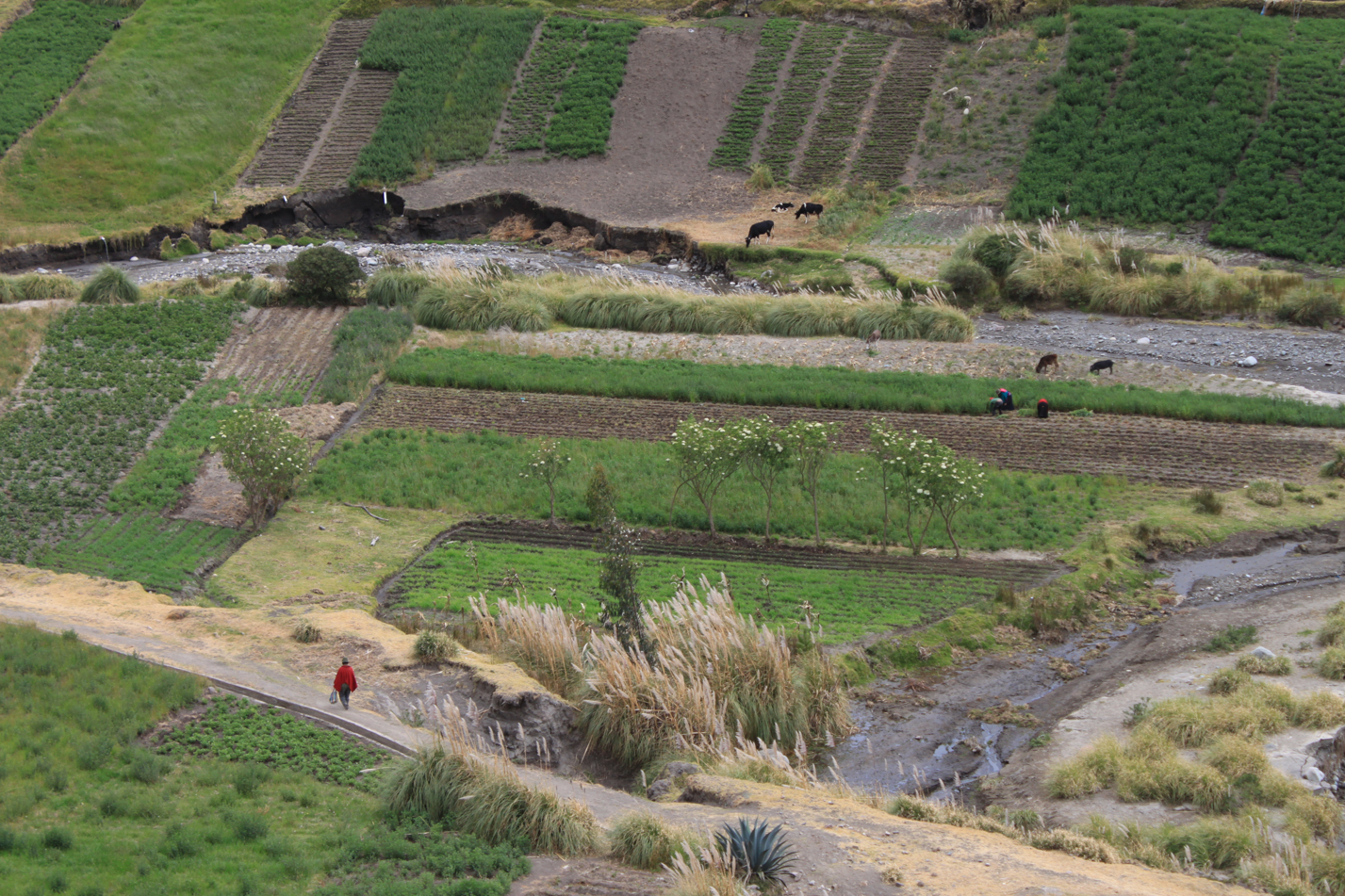Entlang der Straße sind die Felder der Einheimischen. Auch hier in Ecuador wird zum Großteil traditionelle Landwirtschaft angewandt.
