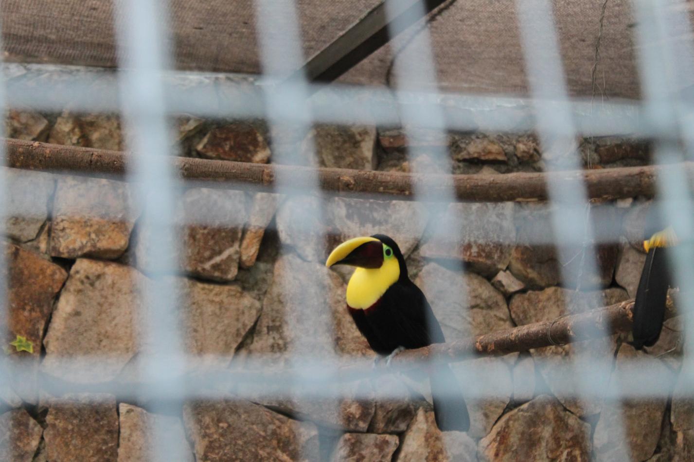 Im Park Pumapungo, gab es viele schöne Tiere zu bestaunen. Leider waren sie halt eingesperrt.