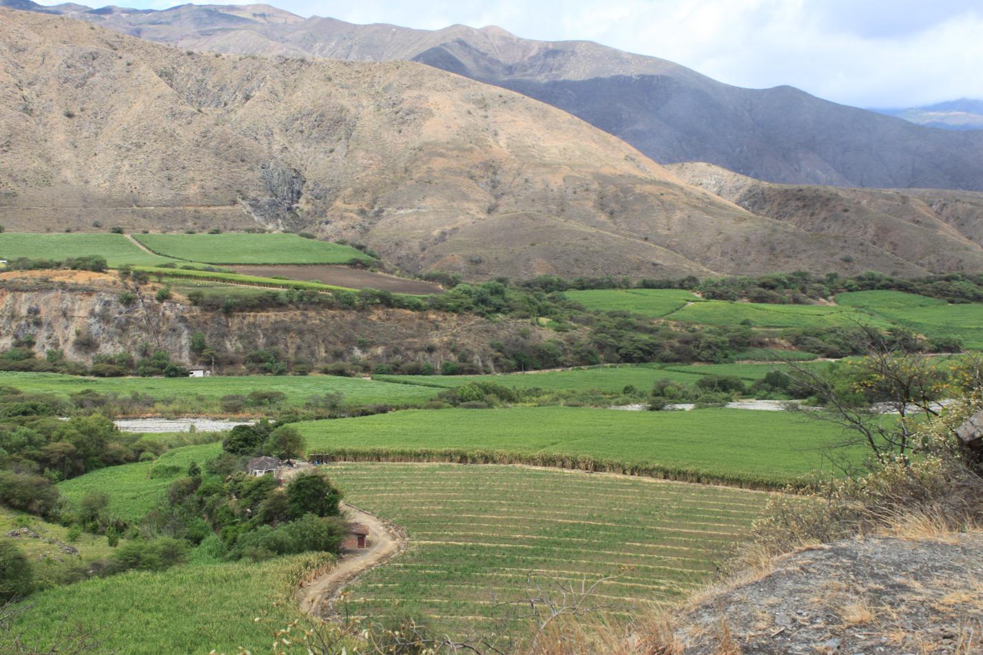 Blick auf die Zuckerrohrfelder im Tal von Catamayo.