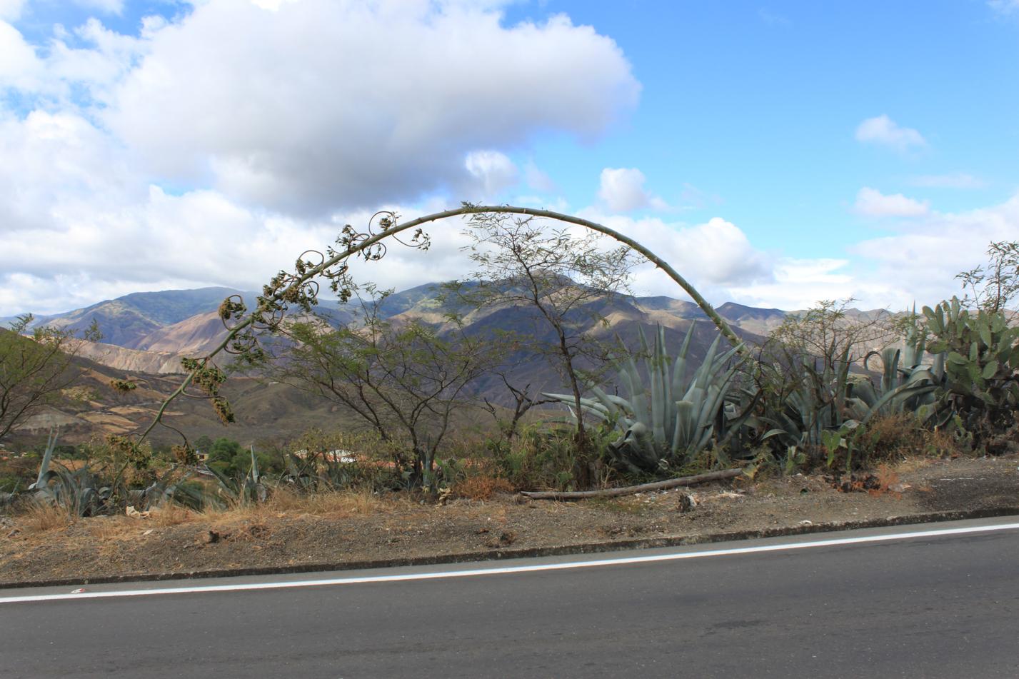 Loja bis Camping hinter San Pedro