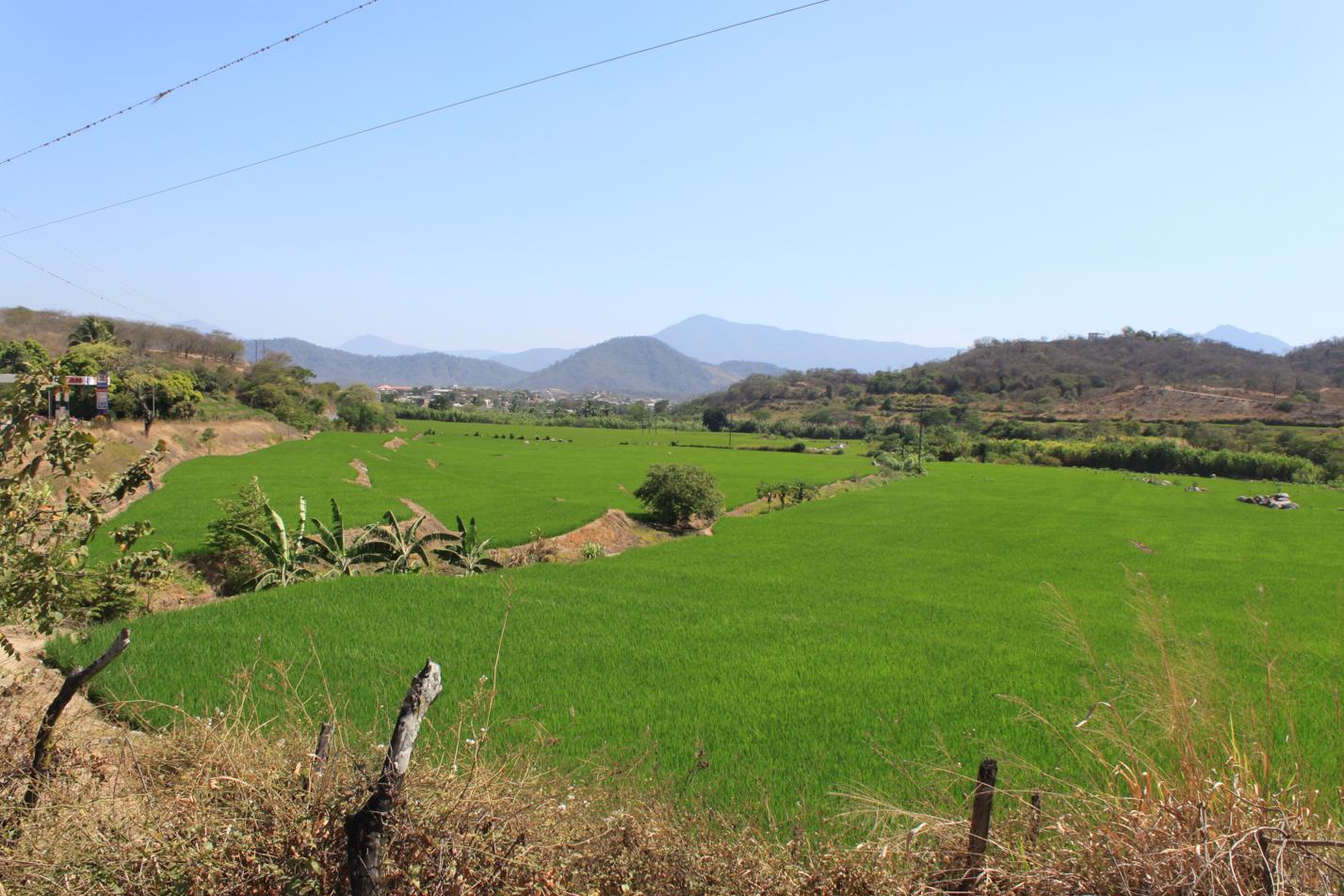 In der kargen Landschaft um Macara, springen einen die saftig grünen Reisfelder, regelrecht ins Auge.