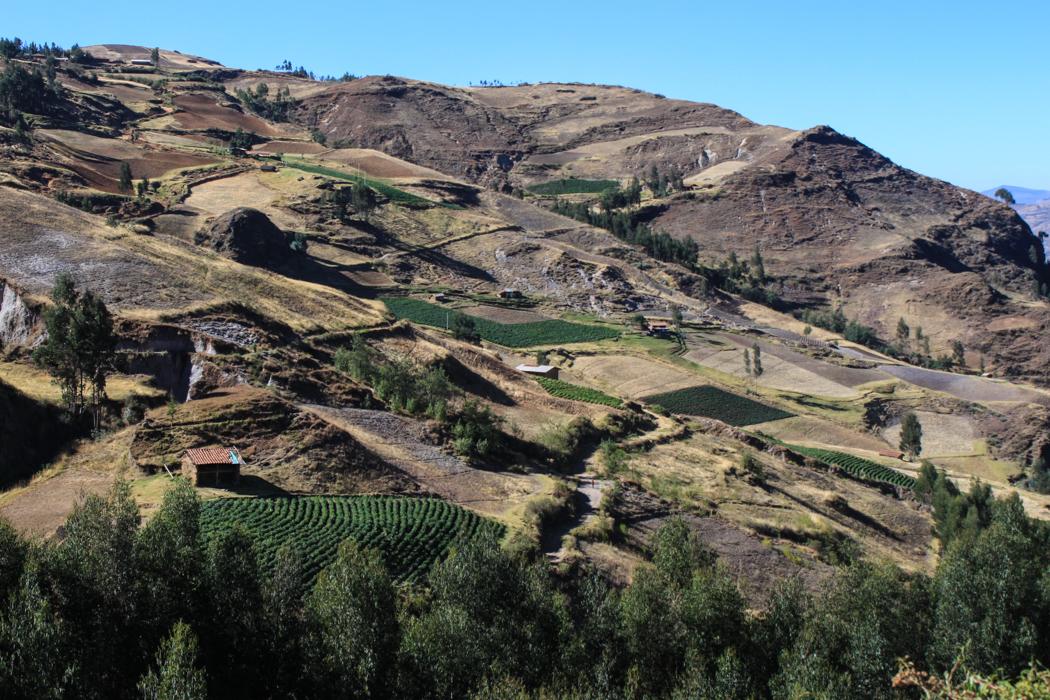 Hauptsächlich werden hier in der Gegend Kartoffeln angebaut.