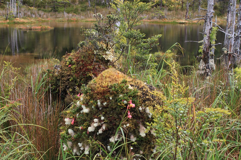 Man mag meinen es sei nur ein Sumpfgebiet. Aber nein - unzählige unterschiedliche Flechten- und kleine Blumenarten, zauberten einen wunderschönen Teppich.