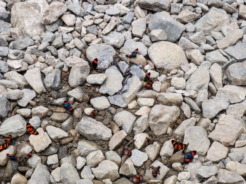 Viele kleine Schmetterlinge brachten etwas Farbe auf den Weg.