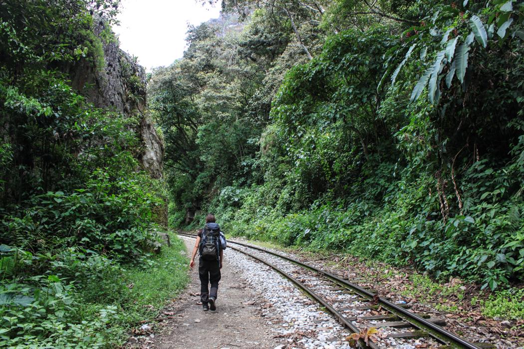 Durch dichten Urwald führen diese Bahngleise. Schreie von Brüllaffen und weiteren Dschungeltieren machten diese Wanderung zu einem besonderem Erlebnis.