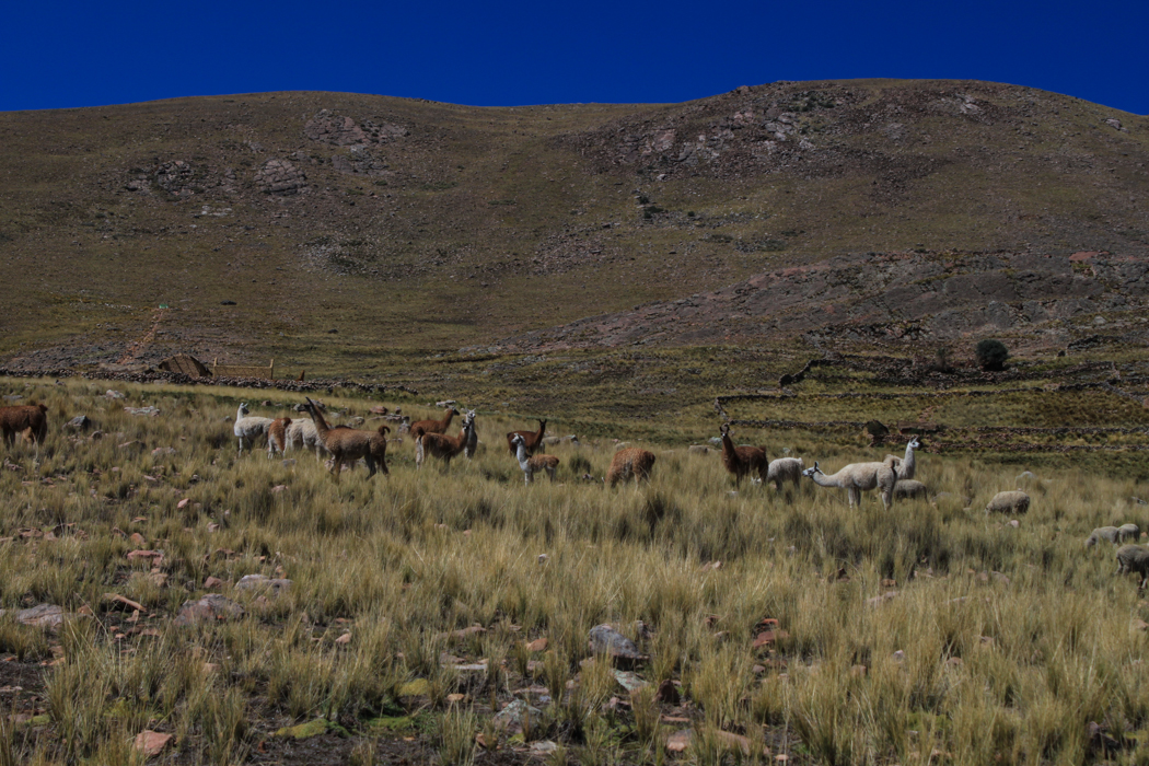 Juliaca to Bolivia